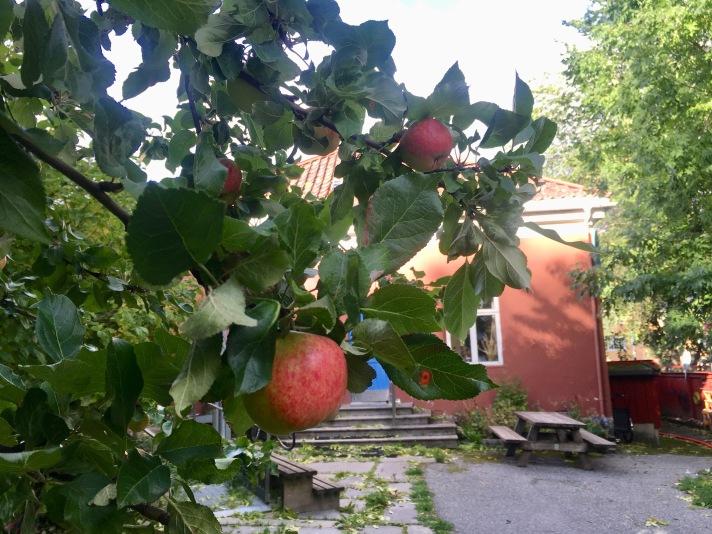Modne epler