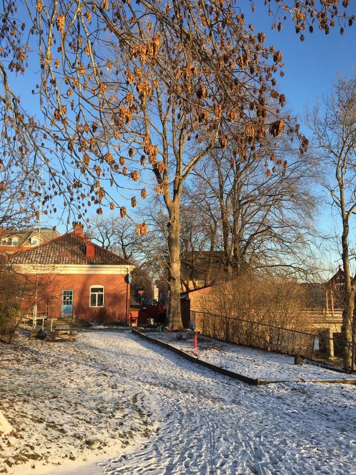 Vinterfrø